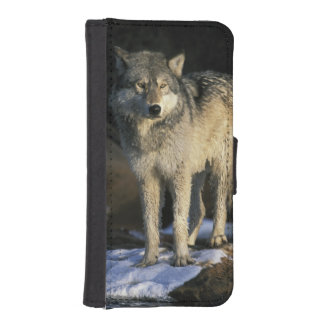 North America, USA, Minnesota. Wolf (Canis iPhone SE/5/5s Wallet Case