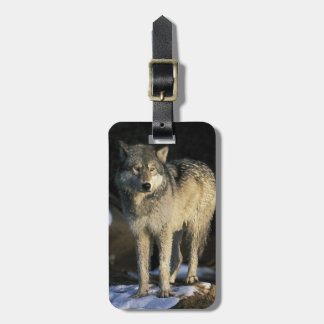 North America, USA, Minnesota. Wolf (Canis Luggage Tag