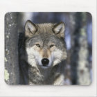North America, USA, Minnesota. Wolf Canis Mouse Mat