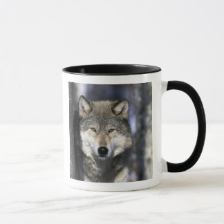 North America, USA, Minnesota. Wolf Canis Mug