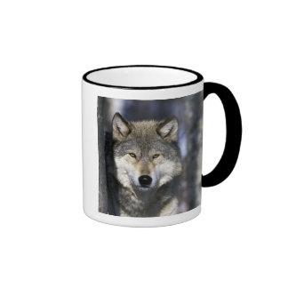 North America, USA, Minnesota. Wolf Canis Coffee Mug