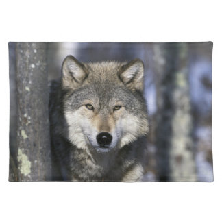 North America, USA, Minnesota. Wolf Canis Placemat