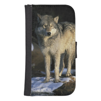 North America, USA, Minnesota. Wolf (Canis Samsung S4 Wallet Case