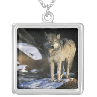 North America, USA, Minnesota. Wolf (Canis Silver Plated Necklace