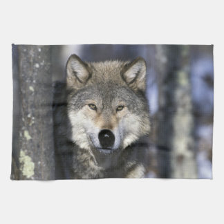 North America, USA, Minnesota. Wolf Canis Tea Towel