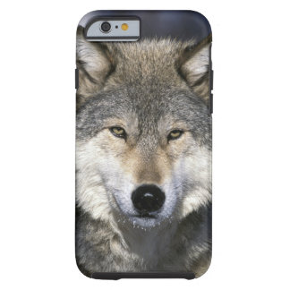 North America, USA, Minnesota. Wolf Canis Tough iPhone 6 Case