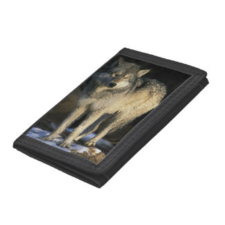 North America, USA, Minnesota. Wolf (Canis Tri-fold Wallets