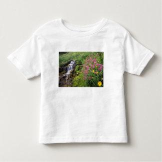 North America, USA, Montana, Glacier National 4 Toddler T-Shirt