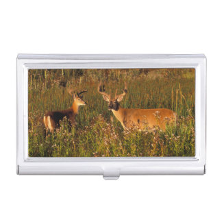North America, USA, Montana, National Bison Business Card Holder