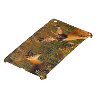 North America, USA, Montana, National Bison Cover For The iPad Mini