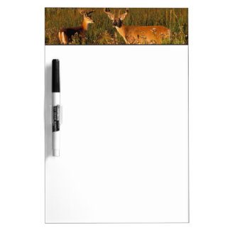 North America, USA, Montana, National Bison Dry Erase Board