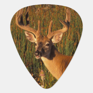 North America, USA, Montana, National Bison Guitar Pick