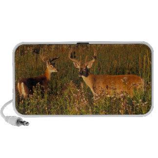 North America, USA, Montana, National Bison iPod Speaker