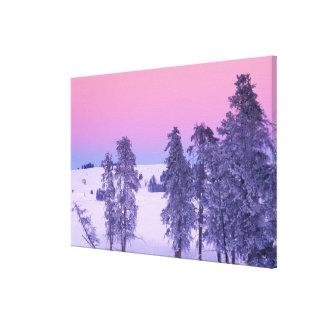 North America, USA, Montana, Yellowstone Stretched Canvas Prints