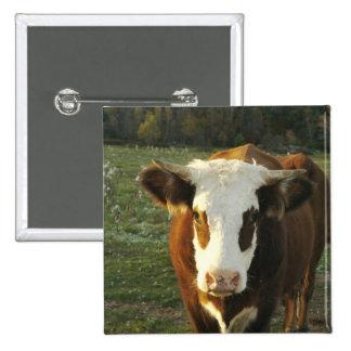 North America, USA, New Hampshire. A bull on 15 Cm Square Badge