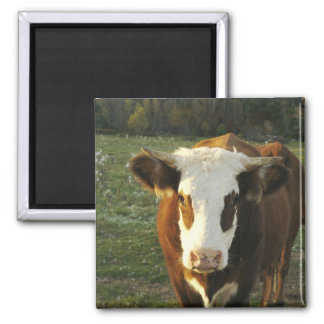 North America USA New Hampshire A bull on Magnet