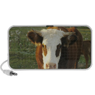 North America, USA, New Hampshire. A bull on Mp3 Speakers