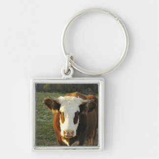 North America, USA, New Hampshire. A bull on Silver-Colored Square Key Ring