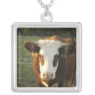 North America, USA, New Hampshire. A bull on Silver Plated Necklace