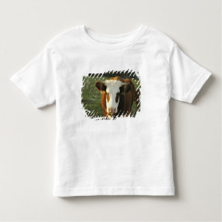 North America, USA, New Hampshire. A bull on T Shirt