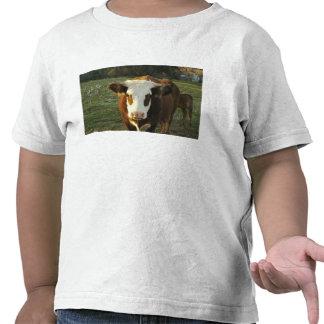 North America, USA, New Hampshire. A bull on Tee Shirts