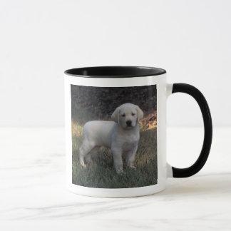 North America, USA, North Carolina. Laborador Mug