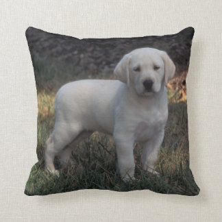 North America, USA, North Carolina. Laborador Throw Pillow