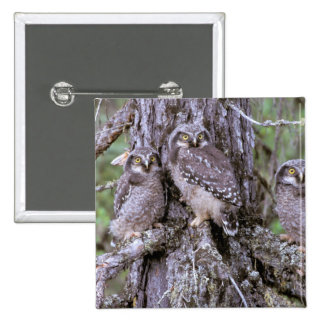 North America, USA, Oregon. Burrowing Owls 15 Cm Square Badge
