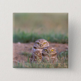 North America, USA, Oregon. Burrowing Owls 2 15 Cm Square Badge