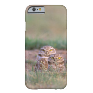 North America, USA, Oregon. Burrowing Owls 2 Barely There iPhone 6 Case