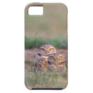 North America, USA, Oregon. Burrowing Owls 2 iPhone 5 Case