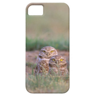 North America, USA, Oregon. Burrowing Owls 2 iPhone 5 Case