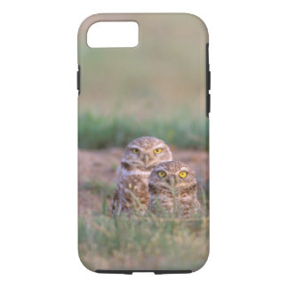 North America, USA, Oregon. Burrowing Owls 2 iPhone 8/7 Case
