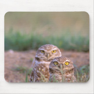 North America, USA, Oregon. Burrowing Owls 2 Mouse Mat