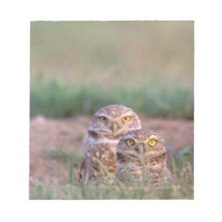 North America, USA, Oregon. Burrowing Owls 2 Notepad