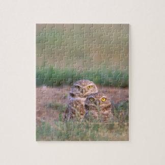 North America, USA, Oregon. Burrowing Owls 2 Puzzle