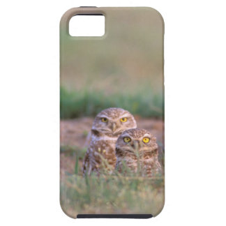 North America, USA, Oregon. Burrowing Owls 2 Tough iPhone 5 Case