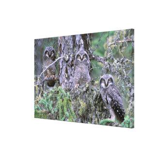 North America, USA, Oregon. Burrowing Owls 3 Canvas Print