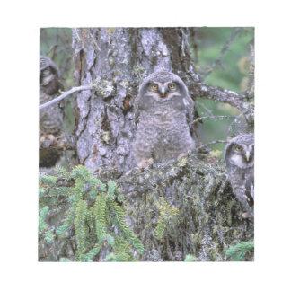 North America, USA, Oregon. Burrowing Owls 3 Notepad
