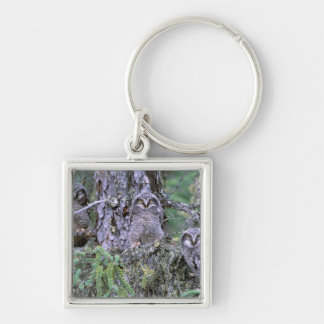 North America, USA, Oregon. Burrowing Owls 3 Silver-Colored Square Key Ring