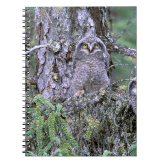 North America, USA, Oregon. Burrowing Owls 3 Spiral Note Book