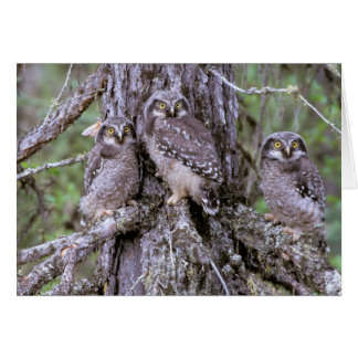 North America, USA, Oregon. Burrowing Owls Card