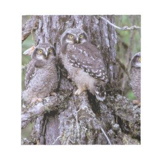 North America, USA, Oregon. Burrowing Owls Notepad