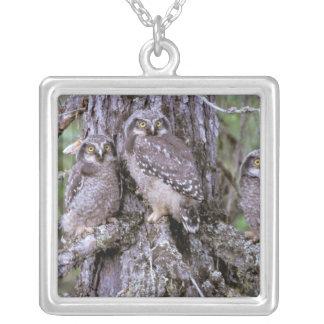 North America, USA, Oregon. Burrowing Owls Square Pendant Necklace