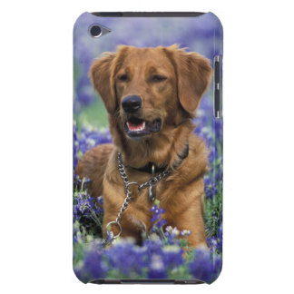 North America USA Texas Golden Retriever in iPod Touch Covers
