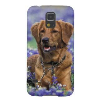 North America, USA, Texas. Golden Retriever in Galaxy S5 Case