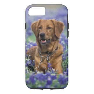 North America, USA, Texas. Golden Retriever in iPhone 8/7 Case