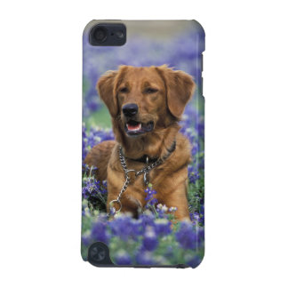 North America, USA, Texas. Golden Retriever in iPod Touch 5G Cover