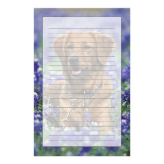 North America, USA, Texas. Golden Retriever in Personalised Stationery