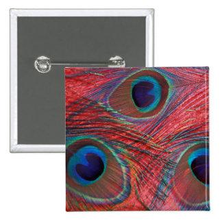 North America, USA, WA, Redmond, Peacock Buttons